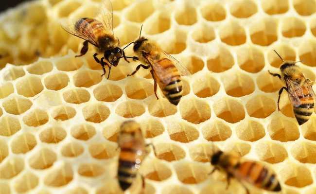 abelhas airbnbee hospedagem