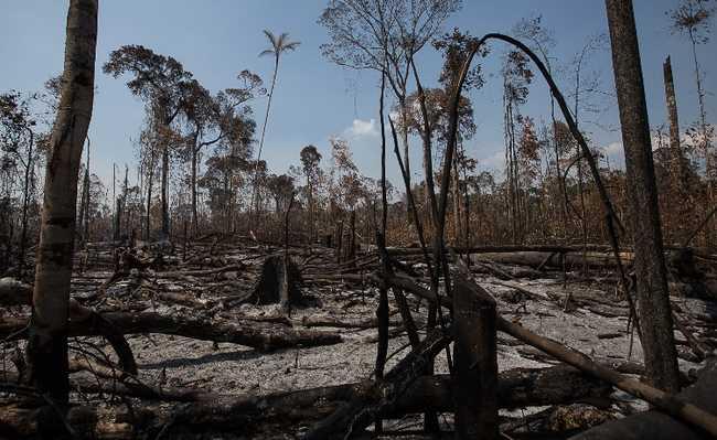 amazônia índios piripkura