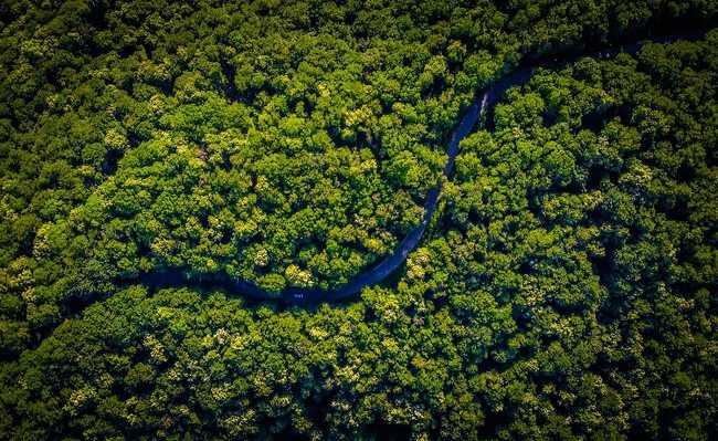 nasa mapeia árvores carbono