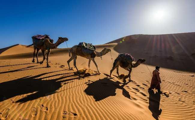 pele camelo refrigeracao