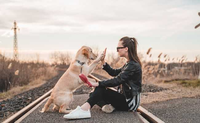 cão mulheres