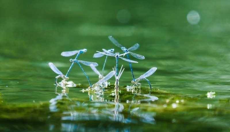 insetos no ecossistema