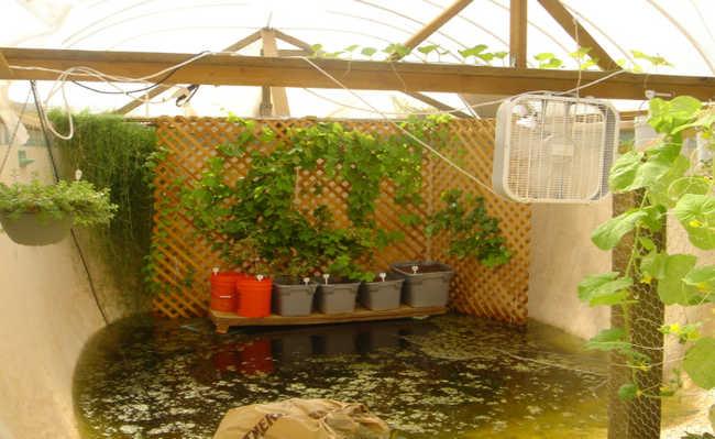 Garden pool a transforma o de uma piscina sem uso em uma for Garden pool dennis mcclung