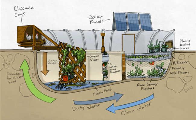 Garden pool a transforma o de uma piscina sem uso em uma for Garden pool haiti