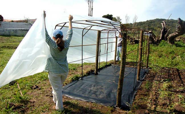 proteja sua plantação do frio e do calor