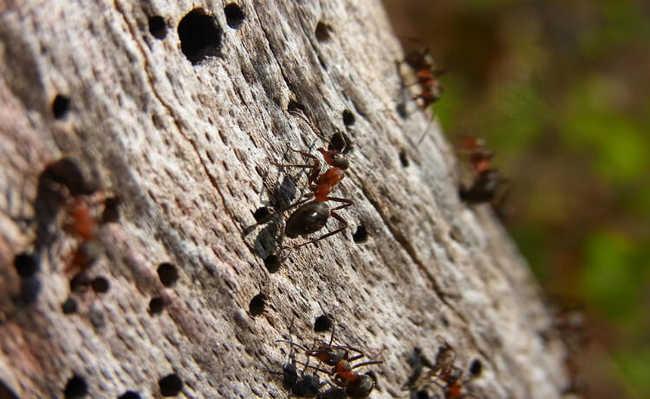 Como acabar com as formigas
