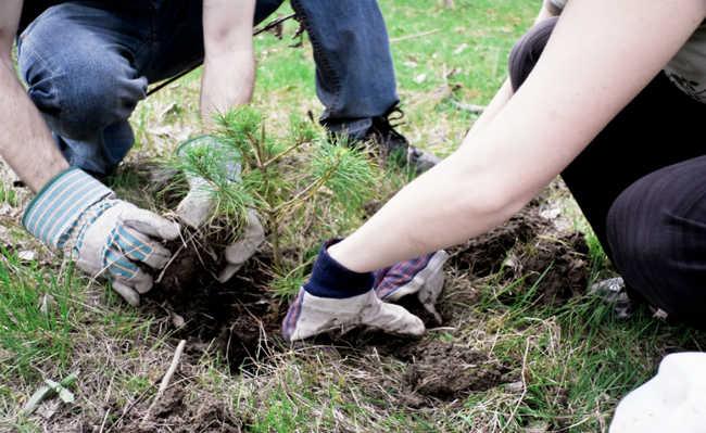 Neutralização por plantio de árvores