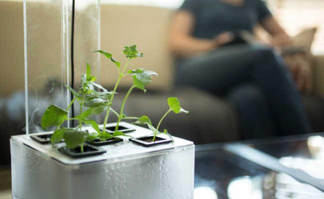 FogBox: uma nova forma de criar plantas em ambientes internos