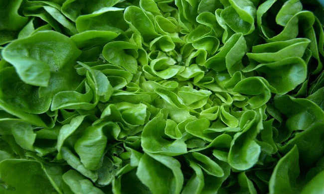 hortaliça