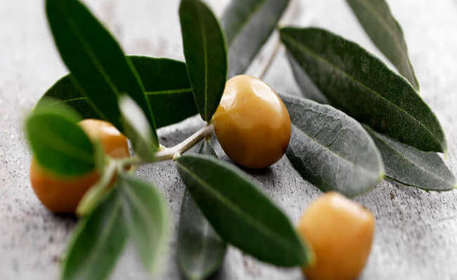 Receita de chá de oliveira