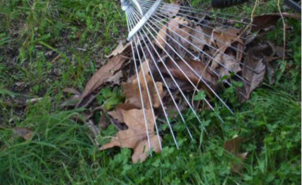 As folhas caídas do seu jardim são bons exemplos de material seco