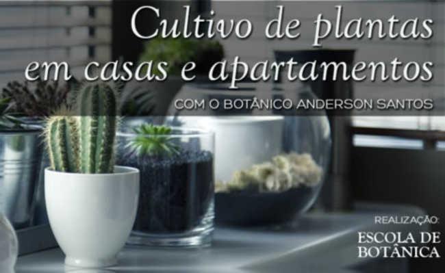Curso ensina cultivo de plantas para casas e apartamentos