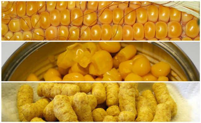 O milho in natura, o enlatado e o salgadinho