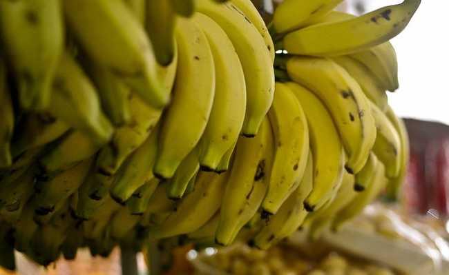 Banana agrotóxicos