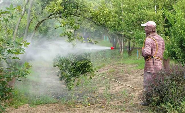 Passando pesticida
