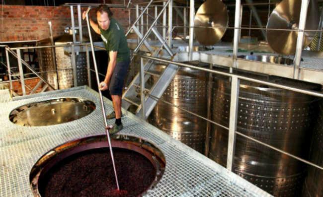 Produção vinho