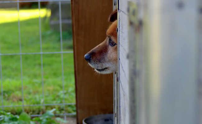 Cão em abrigo