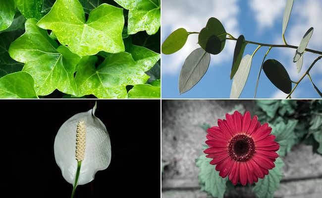 Hera-inglesa, folha de eucalipto, lírio-da-paz, margarida gérbera