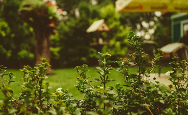 Jardim mais aconchegante