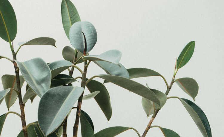 cultivar plantas no apartamento