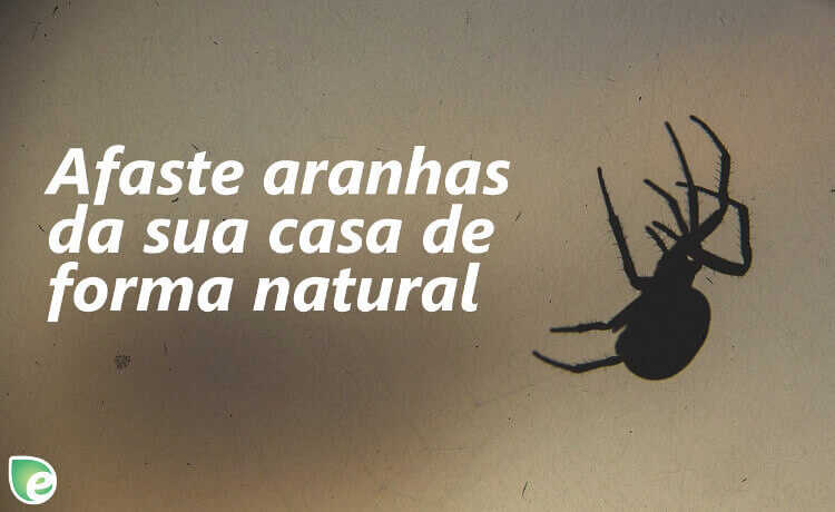 repelente para aranhas