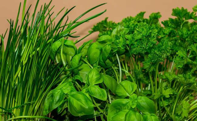 Ervas podem ser usadas como remédios naturais e caseiros para tratar doenças comuns