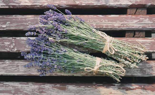 Ervas e plantas medicinais: Lavanda