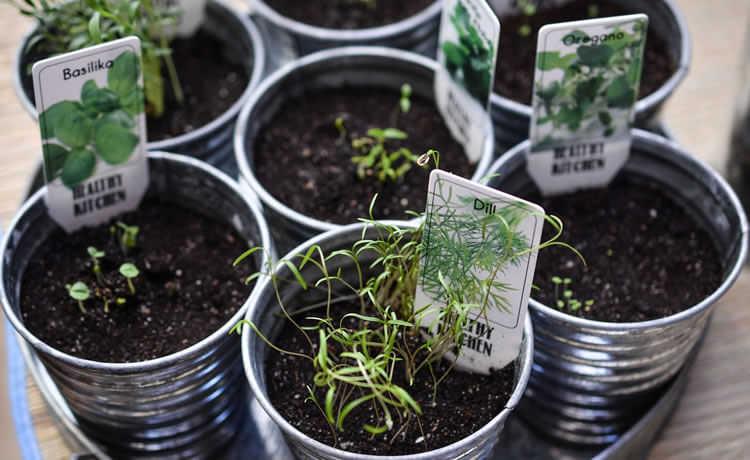 Ervas e plantas