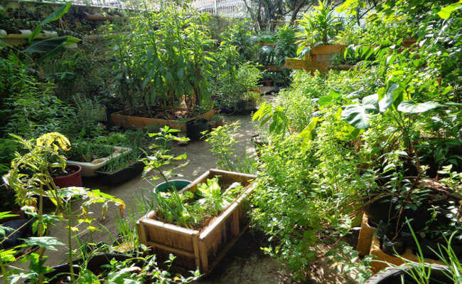 horta diversificada