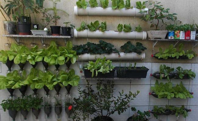horta na vertical