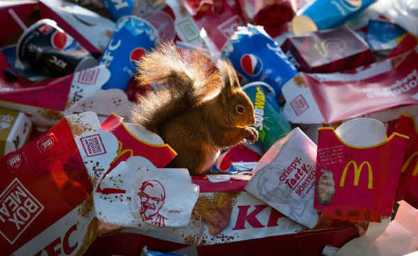 Esquilo no lixo