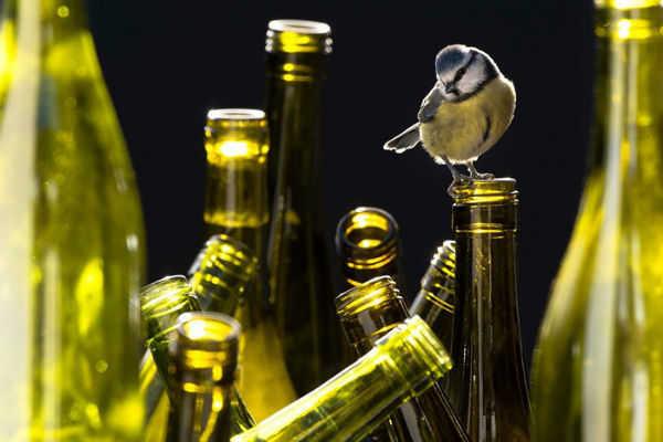 Pássaros em garrafas