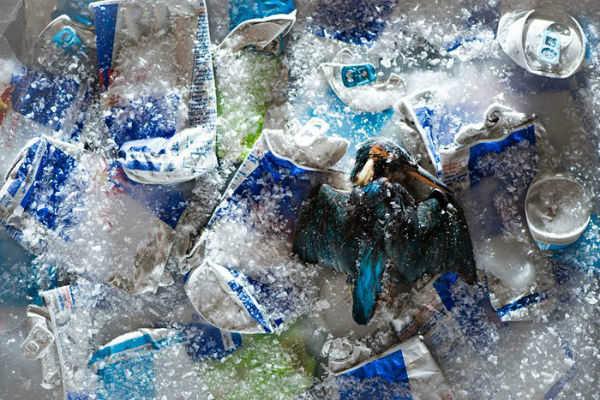 Pássaro e latas de alumínio congelados