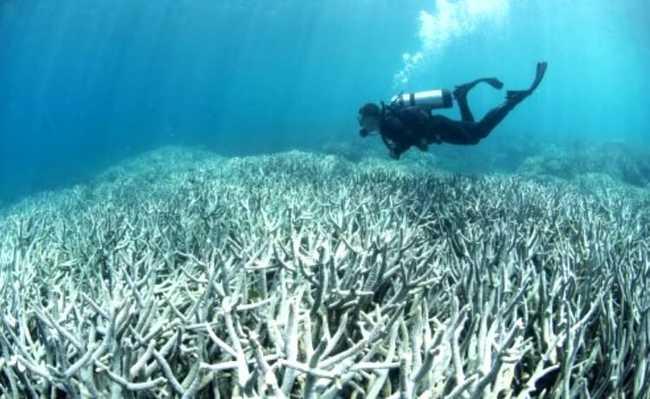 Mergulhador observando corais mortos