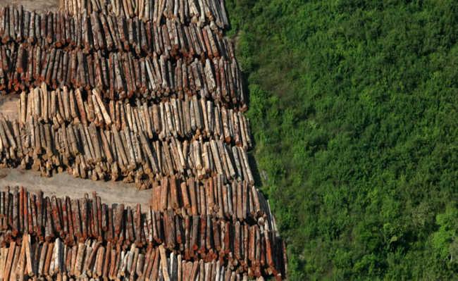 Madeira de desmatamento