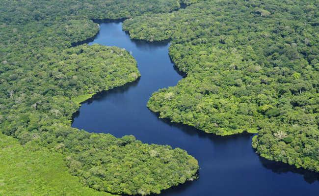Serviços ecossistêmicos das florestas