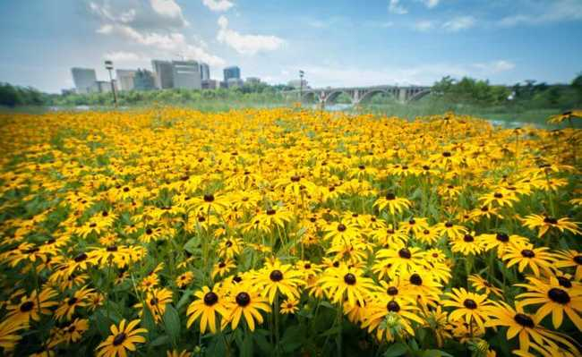 Plantas estão absorvendo mais CO2