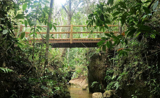 Parque Nacional do Pau Brasil