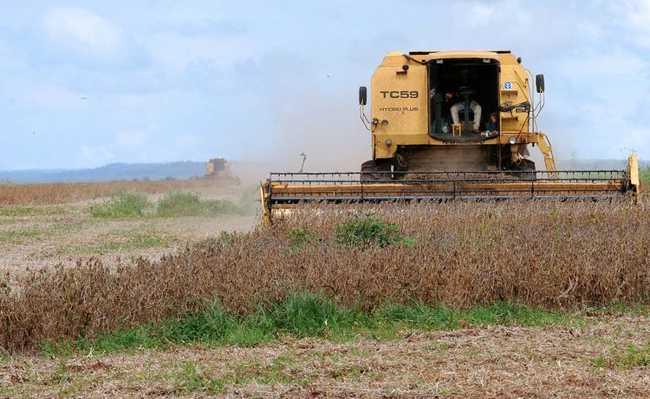 Soja cultivada para alimentar animais