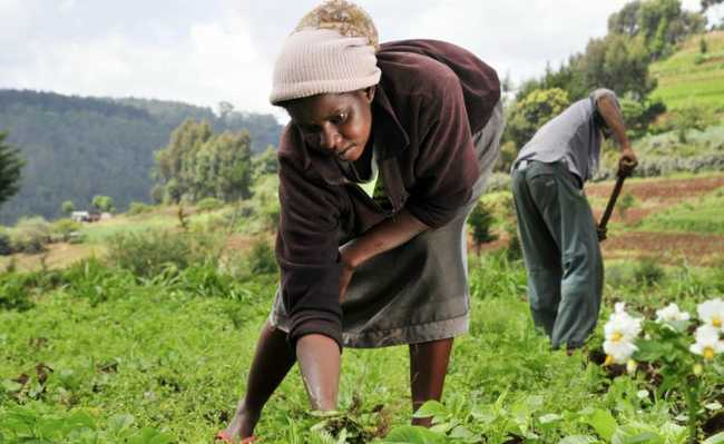 Mulher trabalhadora rural