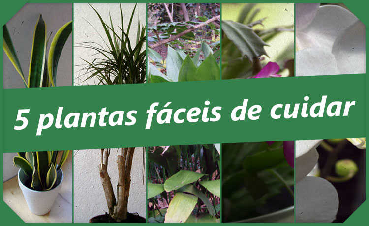 Cinco plantas fáceis de cuidar