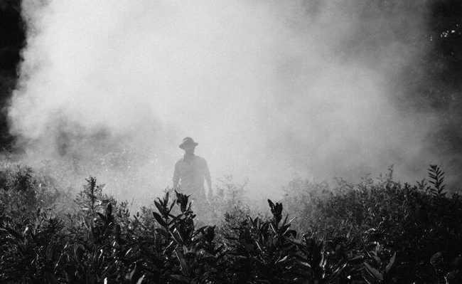 fertilizantes, agricultura, revolução agrícola