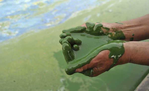 Pescador com as palmas cobertas de uma mistura de água e alga