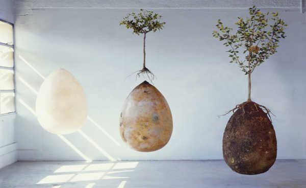 três estagios da capsula mundi, a capsula sozinha, a árvore jovem plantada acima da capsula, e por ultimo a capsula sob a árvore mais adulta