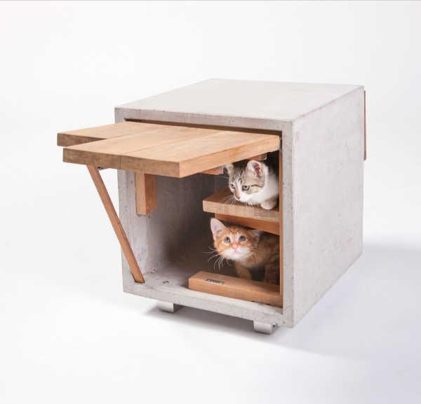 Casinha e gatos