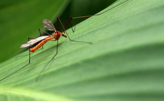 zoom mosquito laranja em cima de uma folha verde