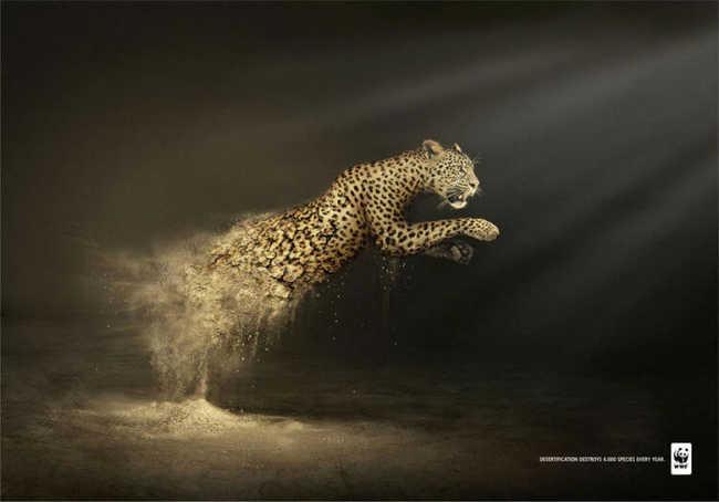 A desertificação destrói seis mil espécies todos os anos