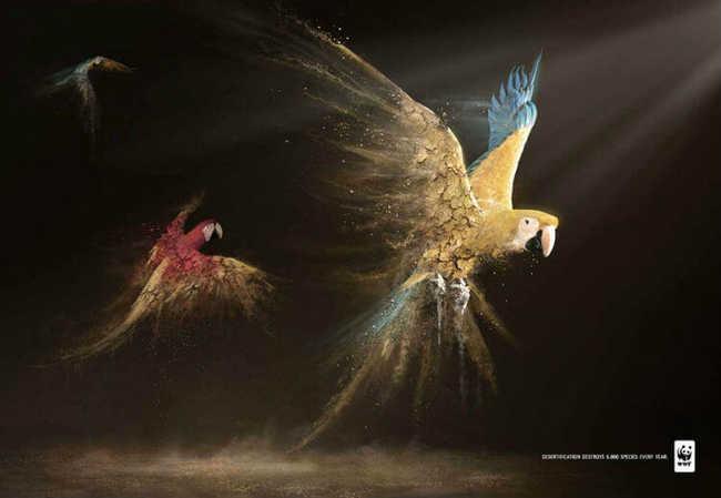 O que a desertificação das florestas pode fazer com as aves e outras espécies em extinção