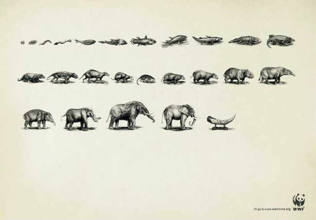 Evolução do elefante