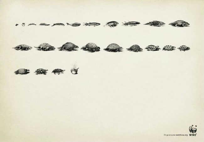 Evolução da tartaruga